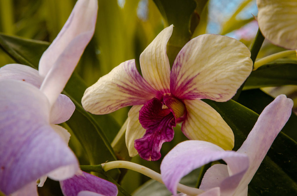Close up of an orchid - Royal Botanical Gardens