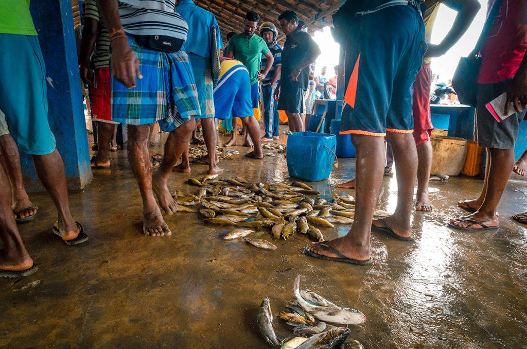 Fish on the concrete floor - Jaffna City