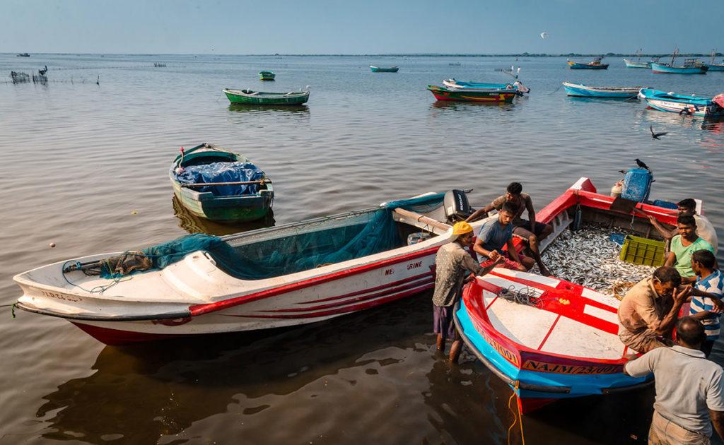 Fishermen with their catch - Jaffna City