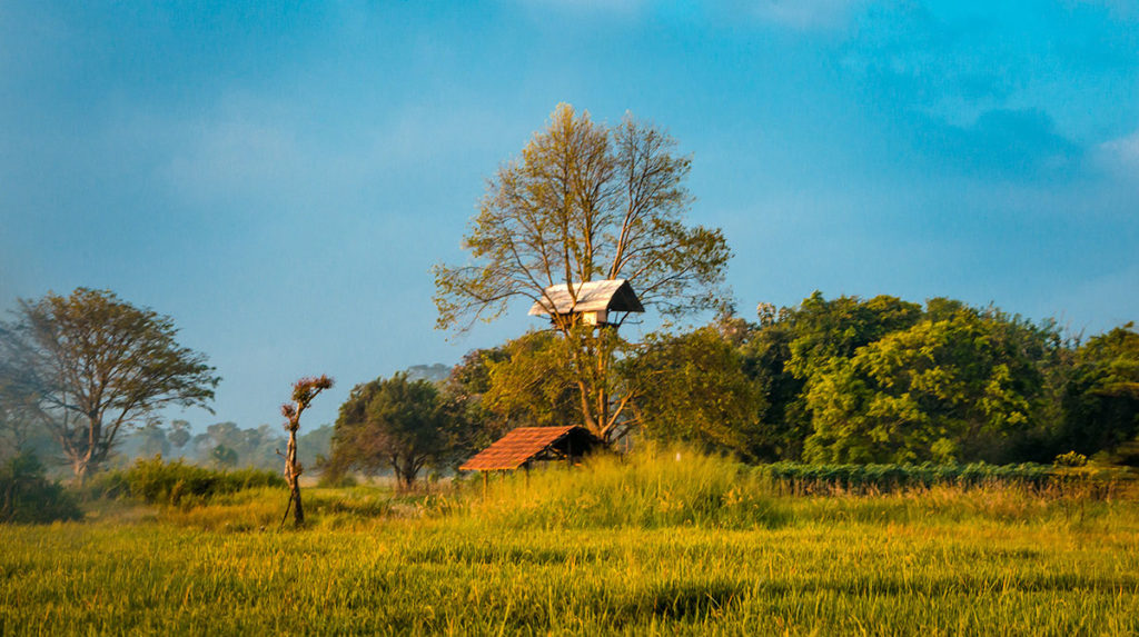 Tree house in the middle of the field - Damulla