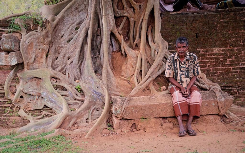 Man by a Banyan tree roots - Pollonnaruwa