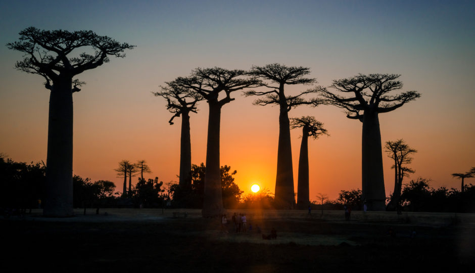 Madagascar Road Trip – Avenue of the Baobabs and Tsingy de Bemaraha National Park