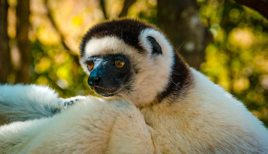 Madagascar Road Trip – Antananarivo to Andasibe