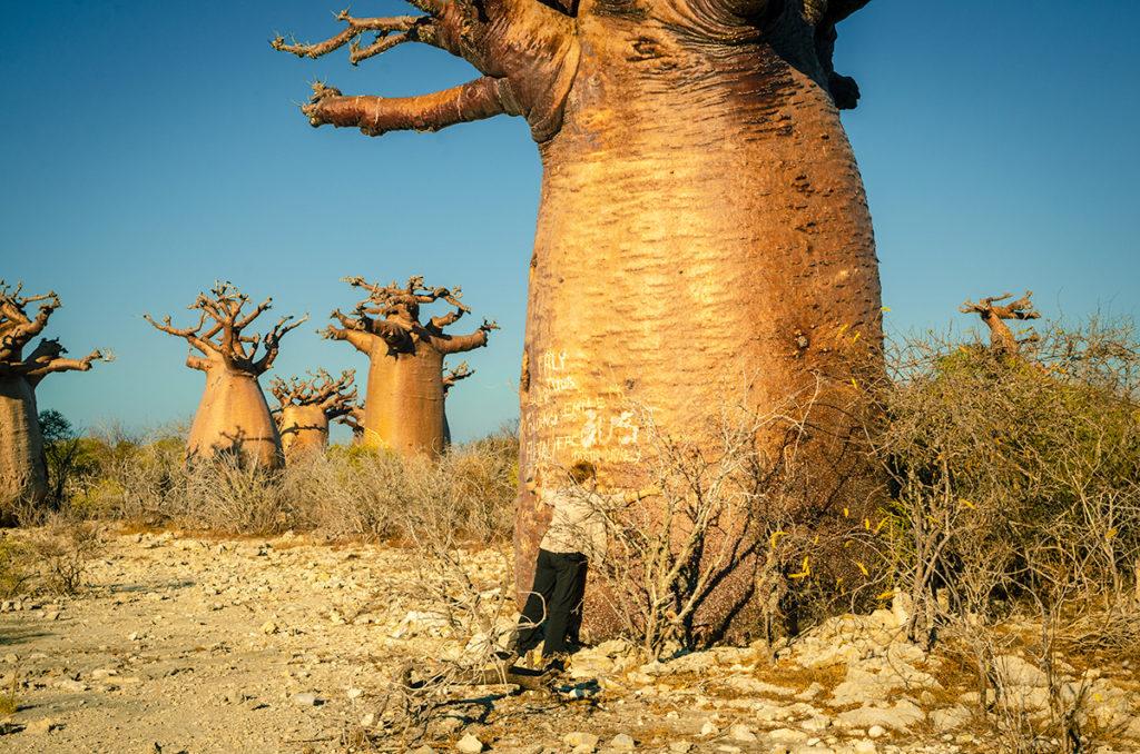 Baobab Stand