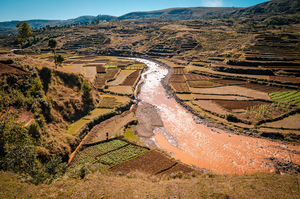 Terraced Crops in Madagascar