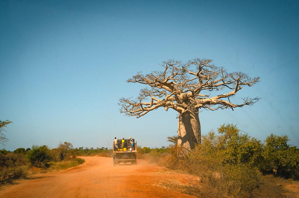 Truck Passing Baobab Tree