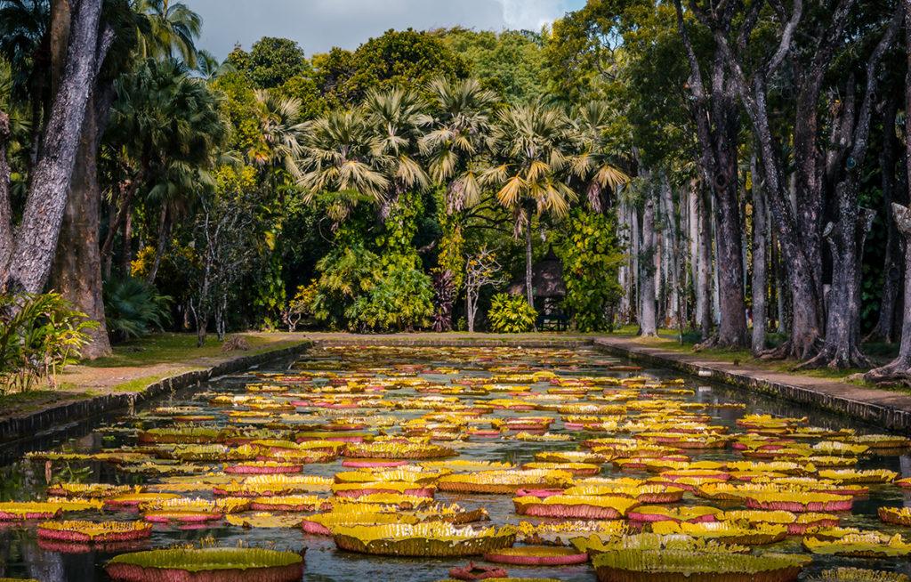 Sir Seewoosagur Ramgoolam Botanical Garden Water Lilly Pond