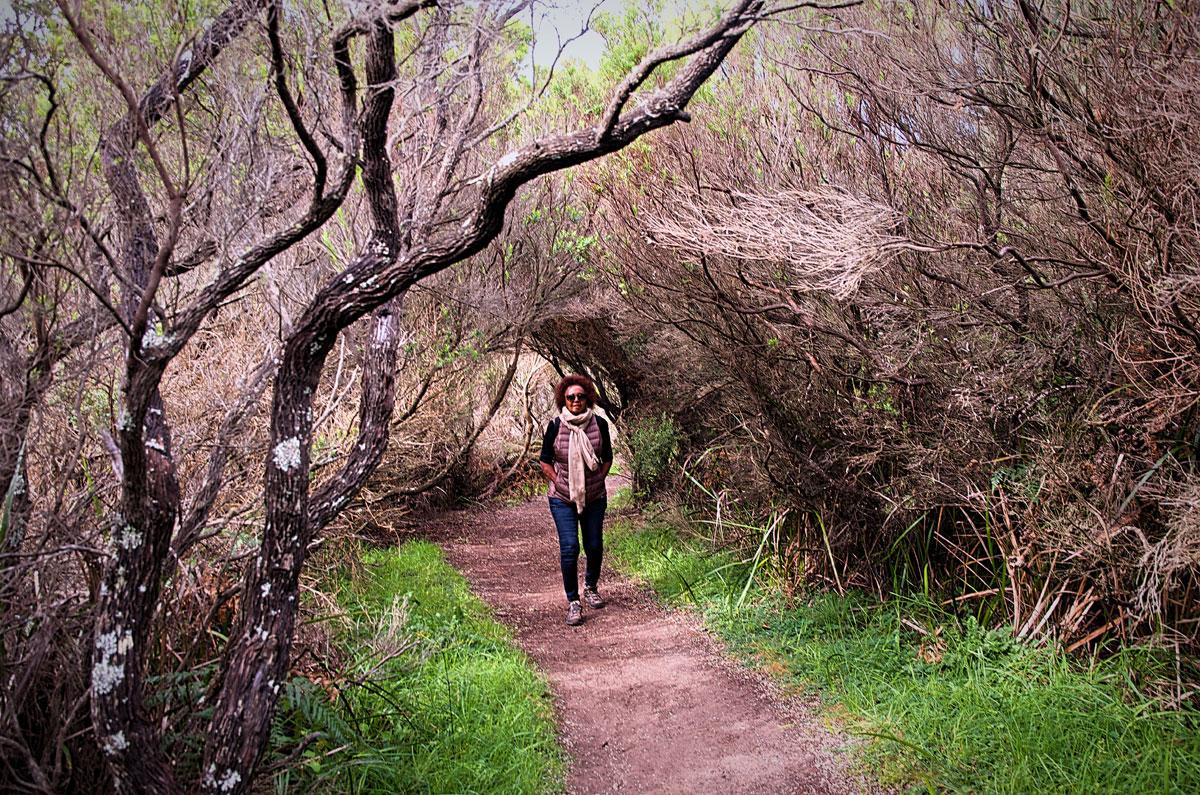 Great Ocean Walk Forest Canopy