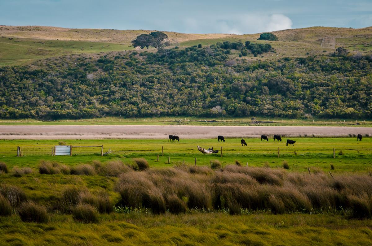 Great Ocean Walk Retreat Beef Farm