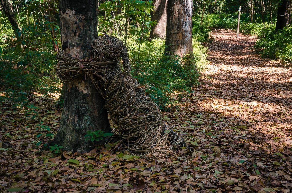 Sigatoka Sand Dunes Tree Huggers