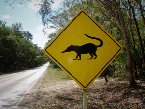 Coati Crossing Sign