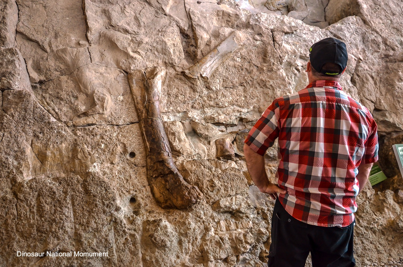 Dinosaur National Monument Fossils